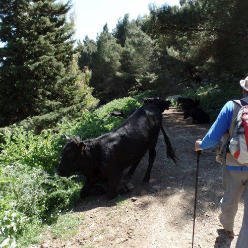 Trekking del 23-04-2017 Montagna Longa (Cinisi -Carini) (11)