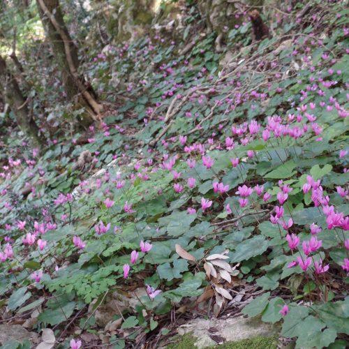 Trekking del 23-04-2017 Montagna Longa (Cinisi -Carini) (24)