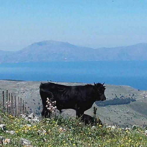 Trekking del 23-04-2017 Montagna Longa (Cinisi -Carini) (3)