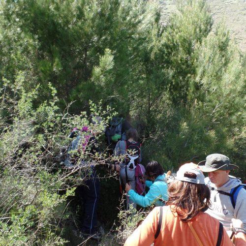 Trekking del 23-04-2017 Montagna Longa (Cinisi -Carini) (9)