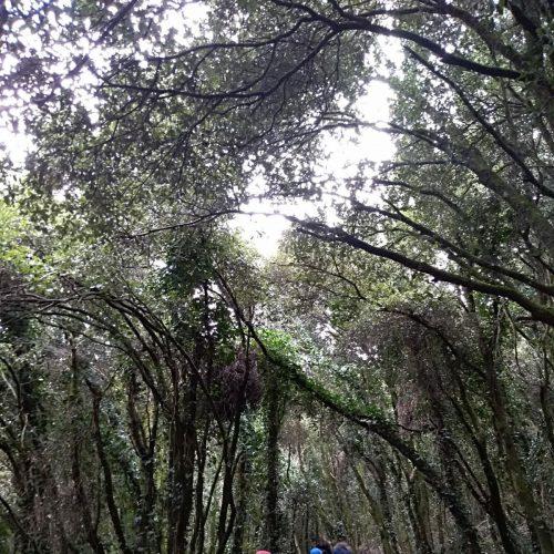 trekking del 30.12 (3)