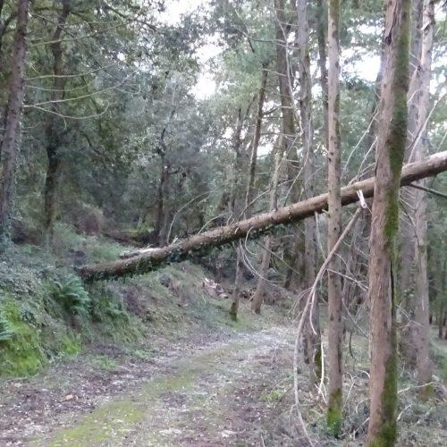 trekking monte bonifato 20.01.19 (1)