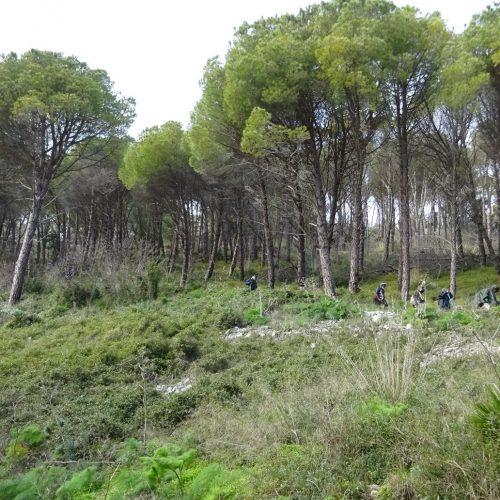 trekking monte bonifato 20.01.19 (142)