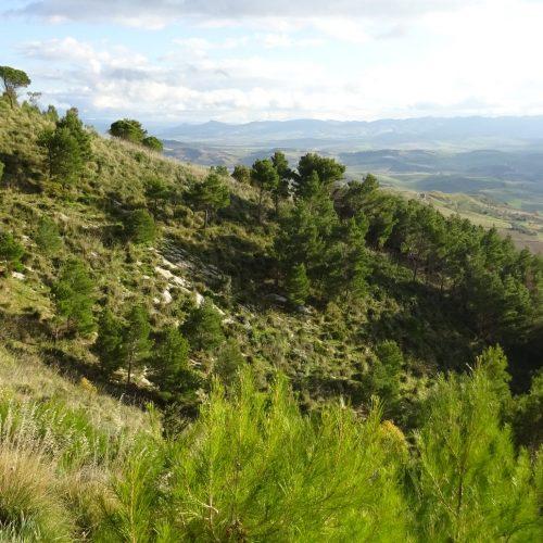 trekking monte bonifato 20.01.19 (22)