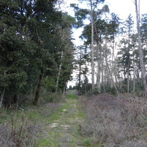 trekking monte bonifato 20.01.19 (43)