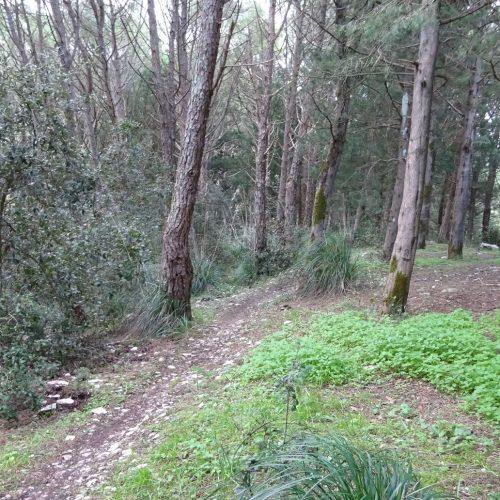 trekking monte bonifato 20.01.19 (46)