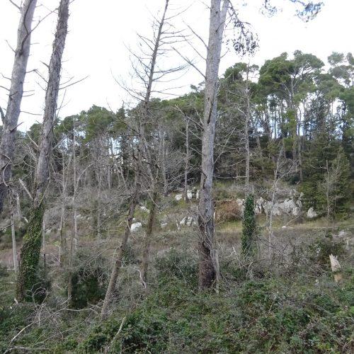 trekking monte bonifato 20.01.19 (54)