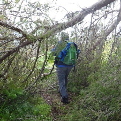 trekking monte bonifato 20.01.19 (57)