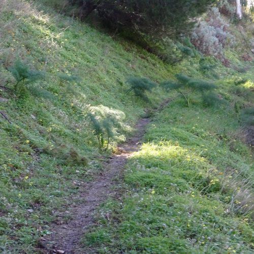 trekking monte bonifato 20.01.19 (6)