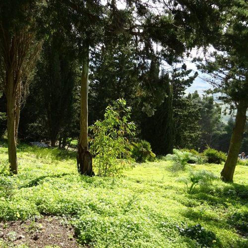 trekking monte bonifato 20.01.19 (64)