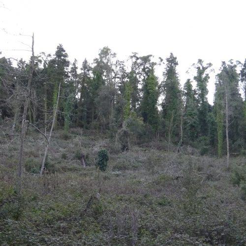 trekking monte bonifato 20.01.19 (75)