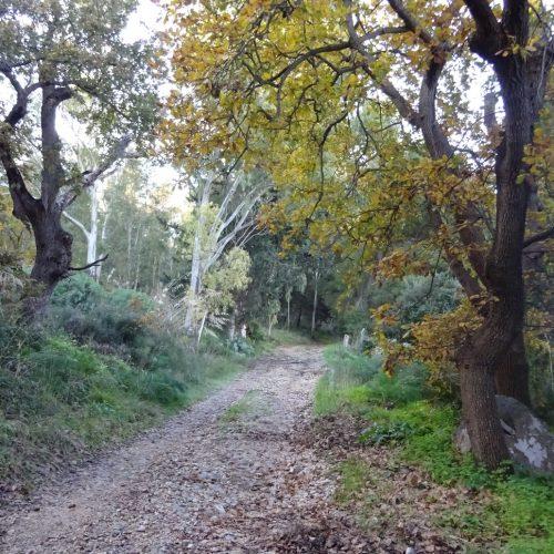 trekking monte bonifato 20.01.19 (80)