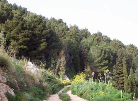 """Trekking – 4°/19, """" Monte Baronia """" (Vita)"""