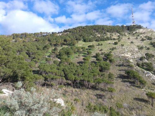 """Trekking """"Monte Bonifato""""  Alcamo"""